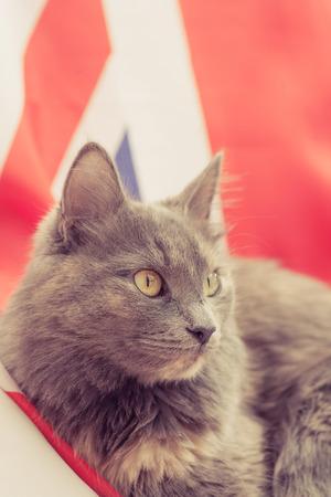 Pussy cat sitting on Union Jack. photo