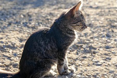 Kitten sitting alone outdoors backlit photo