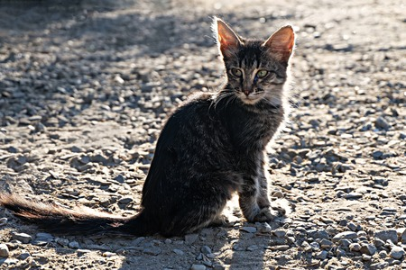 Homeless cat. Pretty Kitten sitting outdoors at sunset and looking at camera photo