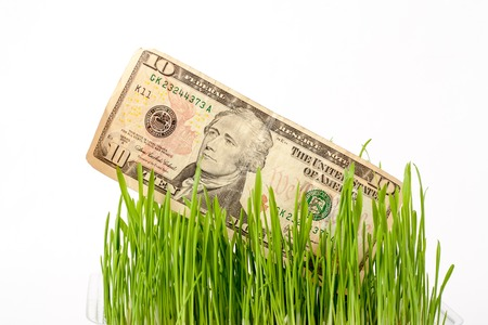 50 dollar bill: Growing dollar. The vegetation of 50 dollar bill on the green grass on white