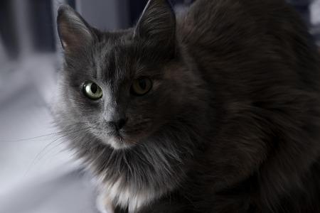 Cute beautiful grey cat indoors half in shadow. photo