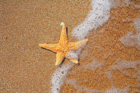 seastar: Seastar on the edge of water and sandy coast, copy space