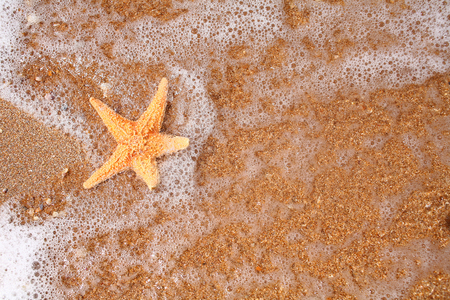seastar: Seastar on the shore of a beach at sunset from above view. Stock Photo