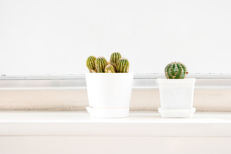 windowsill: Two cactus in white pots on windowsill and a lot of space for text