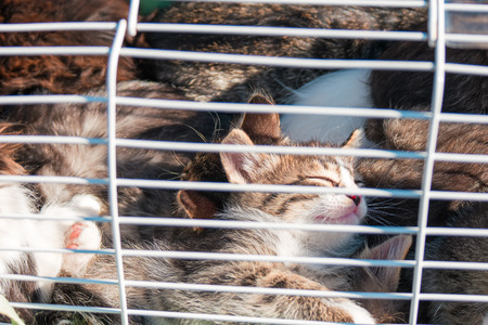 unwelcome: Animal Shelter Orphaned Pet. Many Cute Kittens in Cage