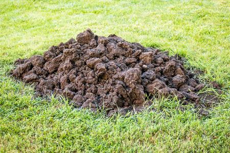 heap: Heap of  organic soil on garden grass
