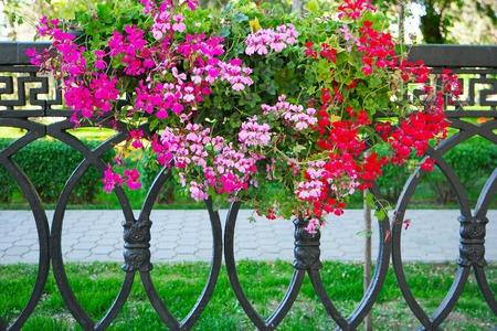 hanging flowers: Petunia Flowers In Hanging Flower Pot on metal fence