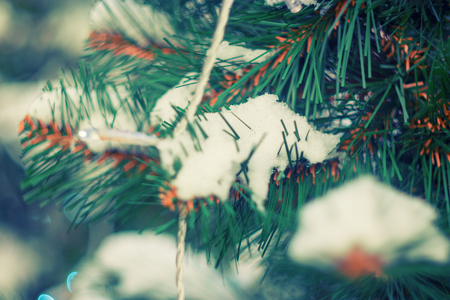 evergreen trees: Twigs og evergreen tree covered with snow toned colorized image