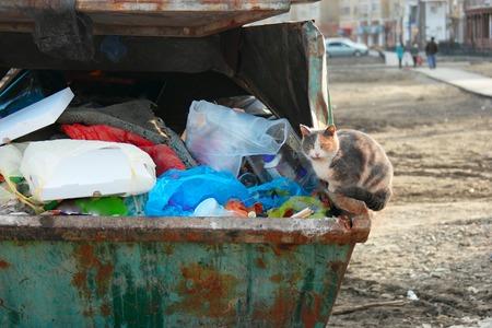 dumpster: Homeless cat sitting on trash dumpster full of garbage. Stock Photo