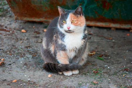 sitting on the ground: Stray cat portrait sitting on ground looking at camera. Stock Photo