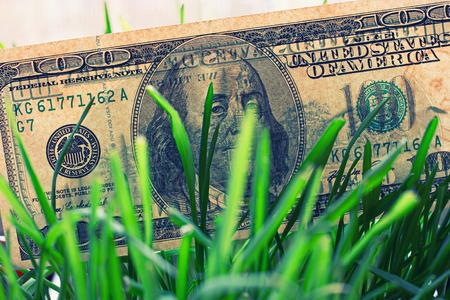 economic activity: 100 dollar bills growing in the green grass, financial growth concept. Stock Photo