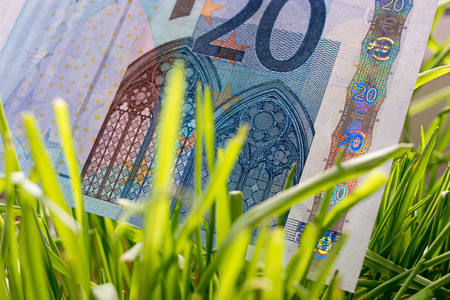 20 euro: 20 euro bill growing in the green grass, financial growth concept.