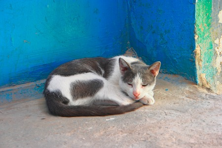 oneself: Old  Lady Cat sleeping roll oneself up into a ball near a blue wall Cinqueterre Italy Stock Photo