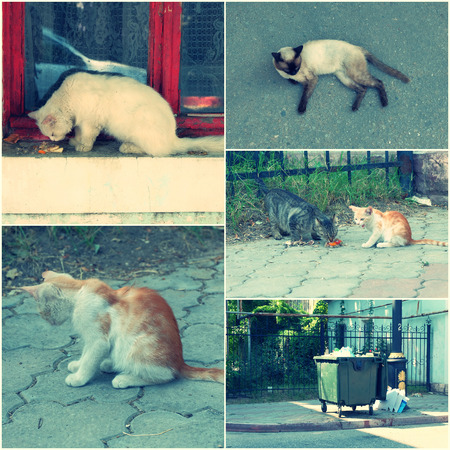 toned image: Feral Cats live outdoors and need adoption collage toned image set.