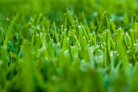 Fresh cut of lawn grass in the early morning with sunshine. Beautiful green grass macro shot.