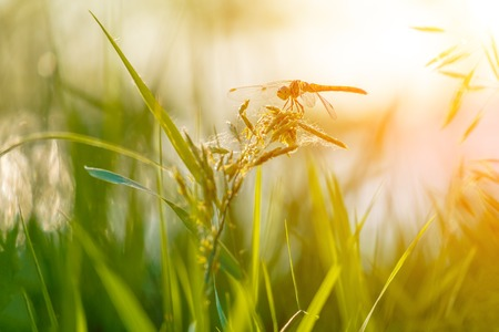 Beautiful closeup silhouette dragonfly on the grass in morning sunshine, copyspace beneath