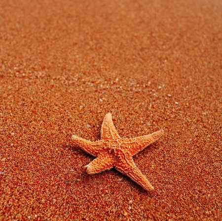 Lonely sea star on coarse sand, a lot of space for text