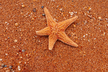 Star fish on coarse sand from above view