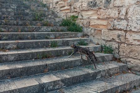Mongrel cat running upwards via stairway, focus on cat, slightly blurred surrounding Stockfoto