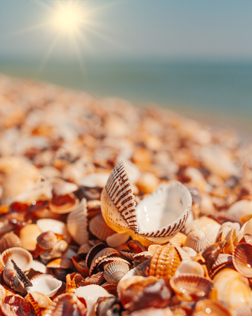 Macro shot Open seashell lying on sall shells cover in front of horizon line with bright sun Imagens