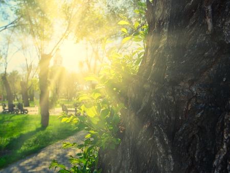 Soleil qui brille sur tronc d'arbre dans le parc avec vue sur l'herbe, copy-space