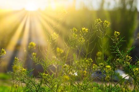 Bloeiende wilde bloemen in zonnige dag in het licht van de gele zon