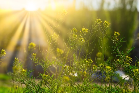 Blooming wildflowers in sunny day in light of yellow sun