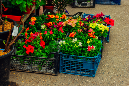 Sale of many varieties of colorful various flowers in boxes