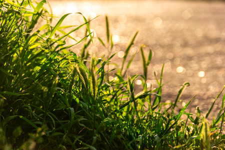Uncut grass half of the scene backlit by warm sunset light shot with copyspace