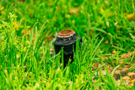Small automatic irrigation system sprinkler head hides in the grass Stockfoto