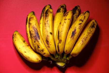 Organic bananas on red background top view. Bunch of bananas is lying on orange background with dark spots marking ripening process.