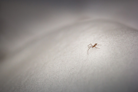 Spider walking accross the snow Banco de Imagens