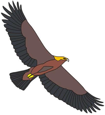 illustration of flying golden eagle, isolated on white background