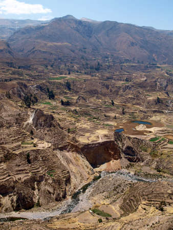 terracing: Terraces in Colca Canyon, Peru