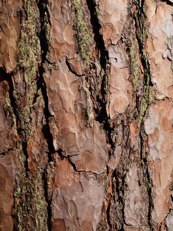 close up of pine tree bark photo