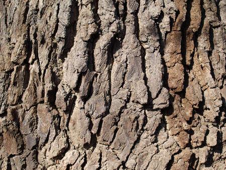 bliska, Grab drzewa kory  Zdjęcie Seryjne - 9237624