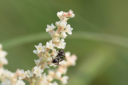 formic: Ant