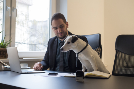 happy businessman working on laptop in office sitting next to dog with a tie by window black table with notebook papers phone jack russell terrier