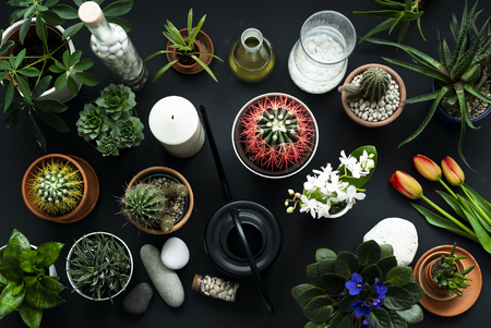 Modern black table decoration. Cactus, succulent plants, tulips, and decorative rocks. View from above.