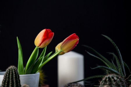Close up of various flowers and houseplants. Black background