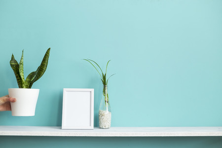 Modern room decoration with Picture frame mockup. White shelf against pastel turquoise wall with spider plant cuttings in water and hand putting down snake plant. Imagens