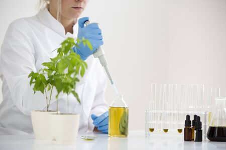 Female scientist in laboratory testing cbd oil extracted from a marijuana plant. She is using a precise dropper and various glass tubes and bowls for the experiment. Healthcare from medical cannabis.