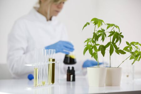 Female scientist in a laboratory working on experiment with cbd oil extracted from a marijuana plant. Healthcare pharmacy from medical cannabis. Titration of the CBD oil in a glass bowl. Stock fotó