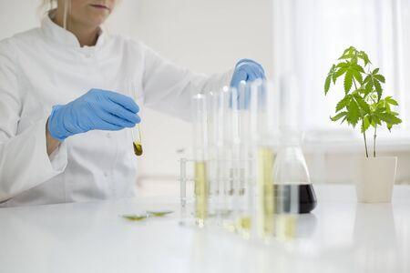 Kobieta naukowiec w laboratorium testującym olej cbd wyekstrahowany z rośliny marihuany. Do eksperymentu używa różnych szklanych rurek i misek. Apteka zdrowotna z marihuany medycznej.