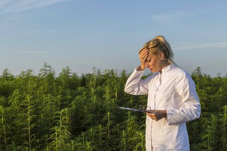 Scientist on marijuana field holding on forehead unhappy with CBD hemp plants. She is sad becouse of bad plants