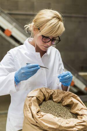 Wissenschaftler, der in der Fabrik Proben von trockenen CBD-Hanfsamen aus dem Sack mit Pinzette und Glasröhrchen nimmt. Anbau von medizinischen und Freizeit-Marihuana-Pflanzen.