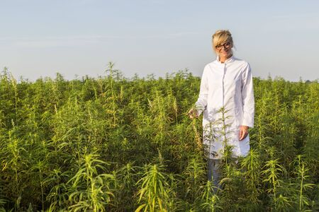 Scientist on marijuana field happy and satisfied with CBD hemp plants. She is smiling and holding buds.