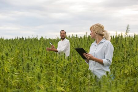 Two people observing CBD hemp plants on marijuana field with magnifying glass. They are taking notes in tablet.