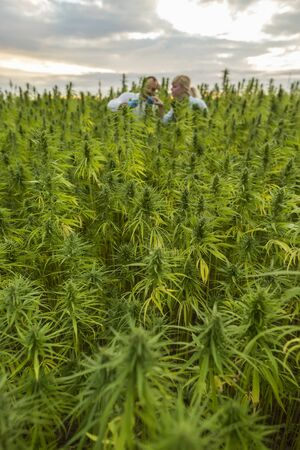 Two people observing CBD hemp plants on marijuana field and writing results in tablet. They are using tweezers and test tube.