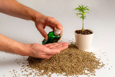 Hands using a CBD spray over a small pile of hemp seeds, and the marijuana plant is positioned next to it in a white flowerpot.